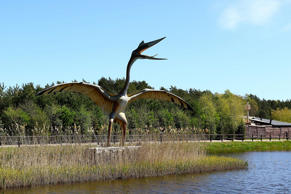 Private Tours from Gdańsk to Dino Park Łeba
